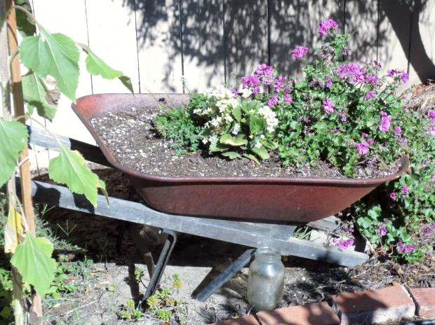 Dad's garden DIY: make a planter out of a tired wheel barrel.