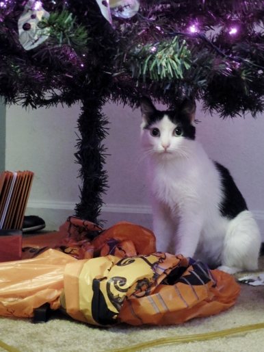 cat under halloween tree