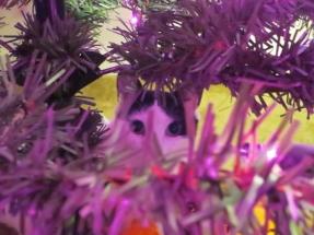 cat in Halloween tree