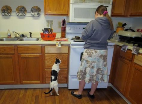 Lol Cat Begging